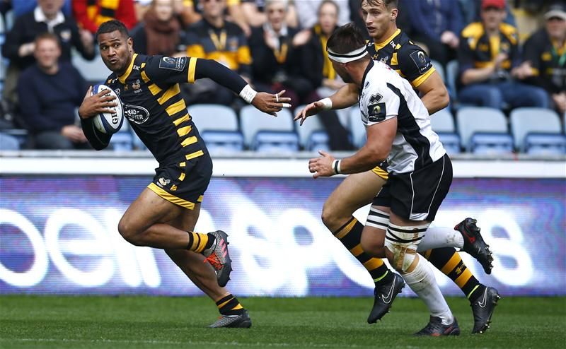 Wasps_Zebre_Action Images_Peter Cziborra