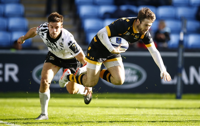 zebre rugby wasps daly